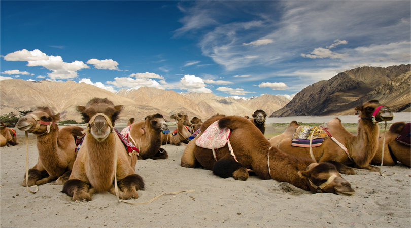 nubra valley ladakh