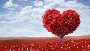 Valentines Day Spl