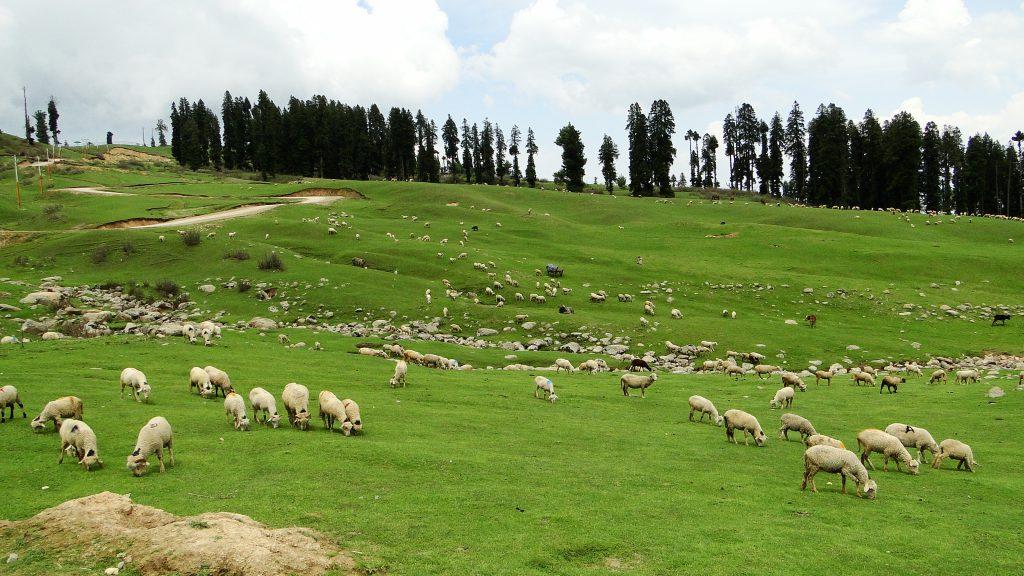 Doodhpathri_southwest_Jammu_Kashmir_India_(7)